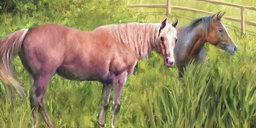 A Useful Guide to the Art of Horse Portraiture